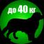 PET_40